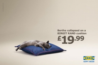 Cat for Ikea advert